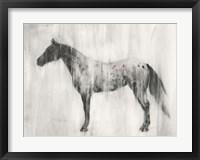 Appaloosa Study II Framed Print