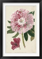 Imperial Floral III Framed Print