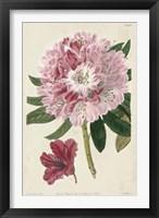 Imperial Floral III Framed Print