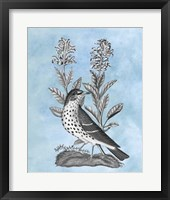Bird on Blue I Framed Print