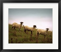 Framed Wooly Friends I