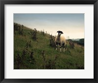 Wooly Friends II Framed Print