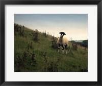 Wooly Friends II Framed Print