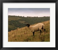 Wooly Friends III Framed Print