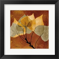 Golden Aspen Framed Print