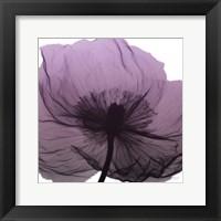 Poppy Purple Framed Print