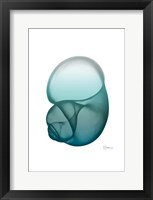 Water Snail Framed Print