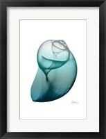 Water Snail 3 Framed Print