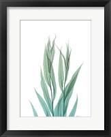 Radiant Bamboo Leaf 2 Framed Print