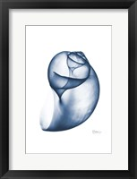Indigo Water Snail Framed Print