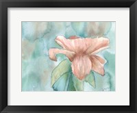 Framed Blush Rose 2