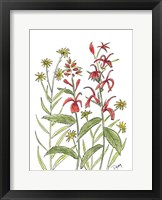 Framed Cardinal Flower