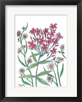 Summer Phlox Framed Print