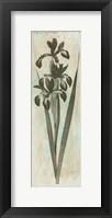 Earthy Floral Framed Print