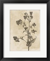Floral Earthtone Three Framed Print
