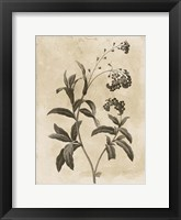 Floral Earthtone Four Framed Print