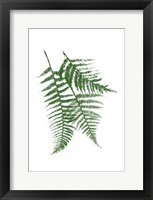 Green Ferns Mate Framed Print