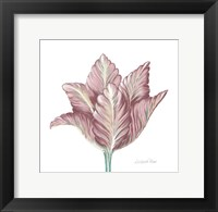 Framed Romantic Tulip 1