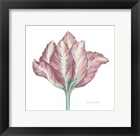 Framed Romantic Tulip 2