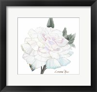 Peace Rose 2 Framed Print