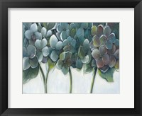 Framed Hydrangea Morning