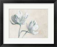 Blue Ivory Blossom 2 Framed Print
