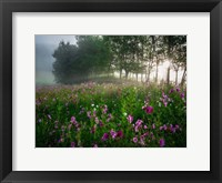 Framed Flower Field