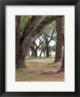 Framed Serenity Park