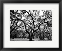 Framed Woodlands