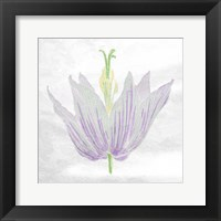 Pastel Flower Framed Print