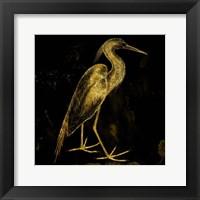 Golden Pride Framed Print