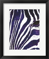 Framed Blue Zebra Mate