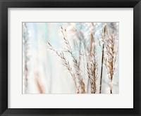 Framed Blue Grasses