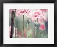 Framed Poppy Pink