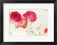 Framed Spring Rannys