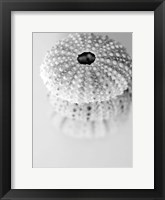 Urchins Framed Print