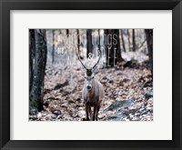 Framed All Reindeer