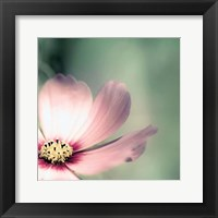 Pink Sosmo Framed Print