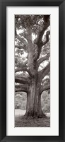 Hampton Field Tree II Framed Print