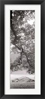 Hampton Field Tree I Framed Print