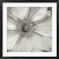 Florison 32 Framed Print