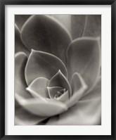 Florison 25 Framed Print