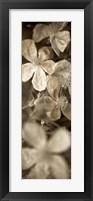 Florison 69 Framed Print