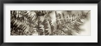 Florison 101 Framed Print