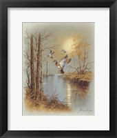 Ducks B Framed Print