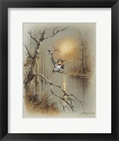 Ducks C Framed Print
