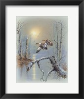 Ducks D Framed Print