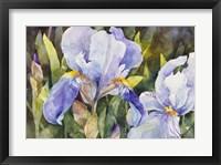 Framed Purple Iris Closeup