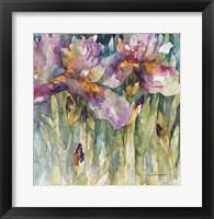 Framed Siberian Iris