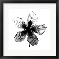 Texas Star X-Ray Framed Print